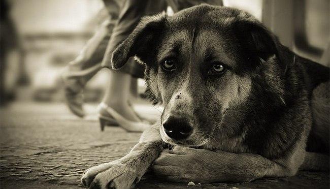 В Астрахани догхантер жестоко расправился с бездомным псом на глазах у детей
