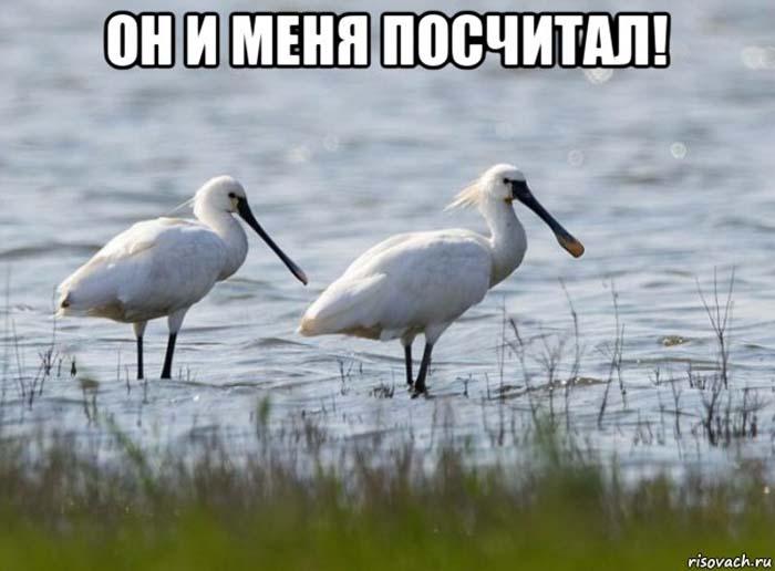 В Астраханской области посчитают гнезда
