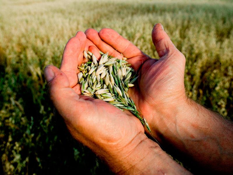 Помощь начинающим фермерам право имею