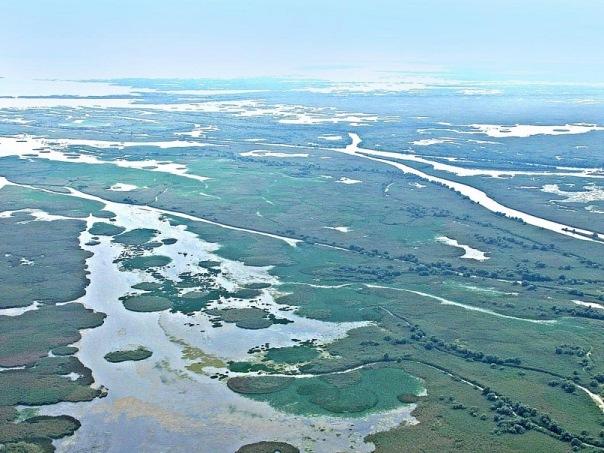 Волга впадает в каспийское море фото