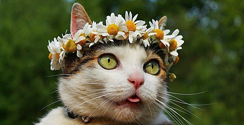 пользователей летний кот картинка авторазбора позволяют существенно