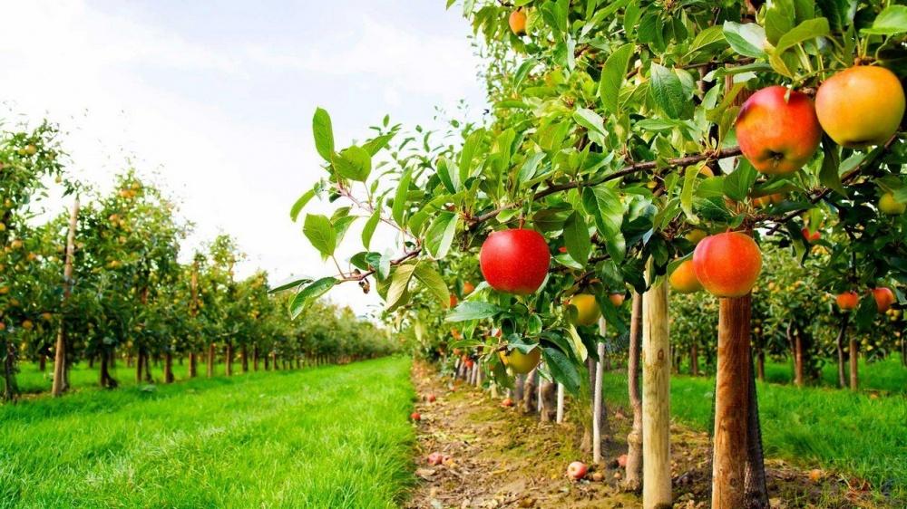 картинки сад с яблонями очень люблю поздравления